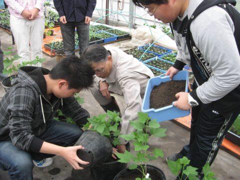 【画像】小さなポットから苗を取り出して小果樹用に移し替えます