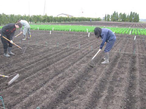 肥料を土壌と混和します