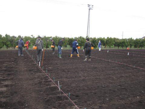 ジャガイモ植え付け作業です