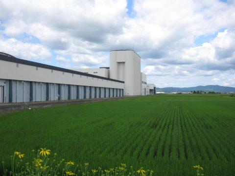 【画像】米ナリー遠景と水田風景