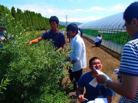 【画像】白鵬関の母国にあるシーベリーの栽培
