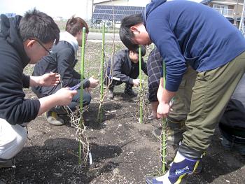 【画像】全員でそれぞれの樹を担当します