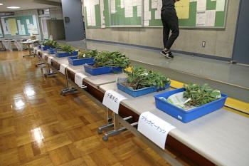 101教室前には落花生の品種の展示コーナーも