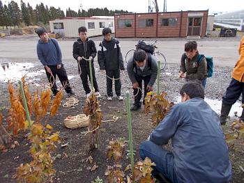 農場の石田さんから冬囲いの縄の巻き方を習います