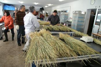 使用する稲わらはすべて本学産です。