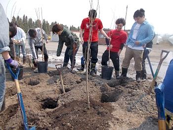 キラベリー定植用の直径30cm深さ30cmの植え穴です