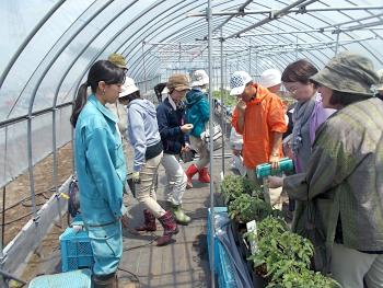 同じく枝沢さんからは卒論の大玉トマトの正方法試験について節米しました。