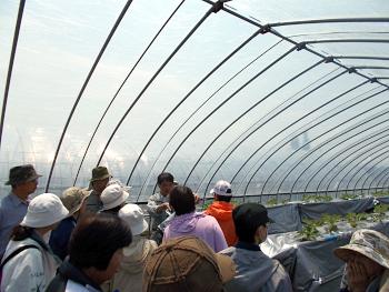 その後は圃場視察と質疑応答です。まずは、イチゴハウスで養液栽培にビックリ!