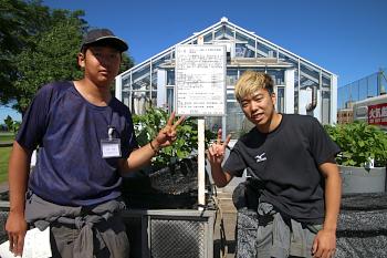バレイショのポット栽培