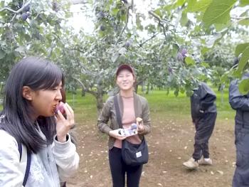 プルーン講習会の醍醐味は栽培講習を受けながらの実食です。