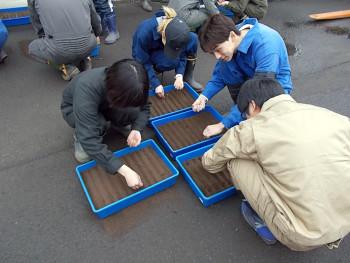 最初に育苗箱に床土を入れ溝を切ります