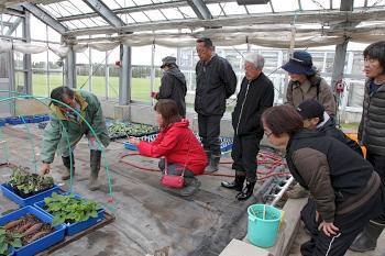 サツマイモの育苗方法を見学