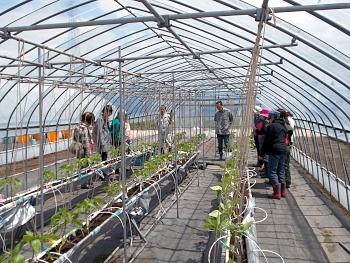パプリカのハウスで養液栽培の取り組みを解説しました。