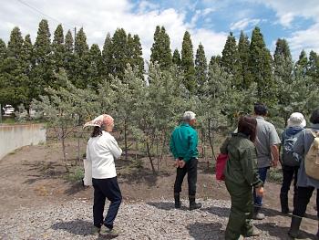 最後に使用果樹を観察しました。昨年は豊作だったシーベリーは今年は?