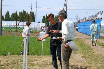 水稲の歴代品種栽培