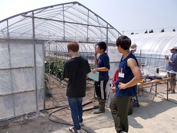 パプリカの栽培試験