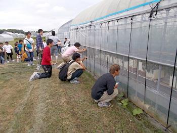 最後に全農式の養液栽培トマトを視察しました