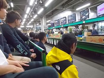 札幌花き市場で切り花の競りを見学