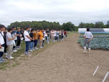 アブラナ科野菜の品種比較試験圃場です