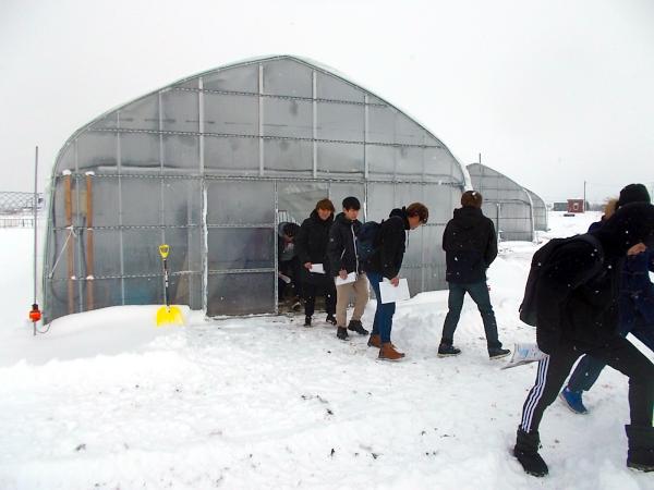この日は丁度吹雪でハウスの周りは積雪状態でした