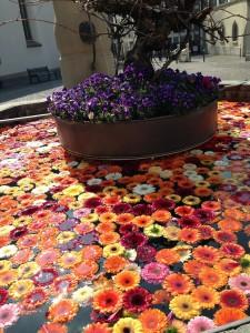花の浮いている噴水