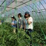 15 トマトハウス