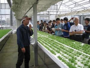 三つ葉の養液栽培ハウスです
