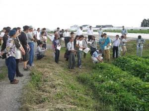 大塚さんの有機栽培のサツマイモ圃場