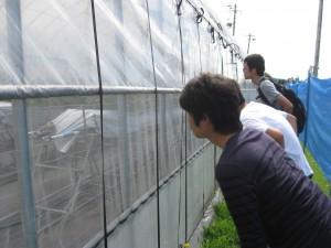 種子いちごの栽培を熱心に観察